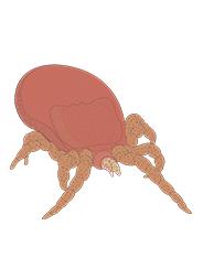Biological Controls (Live Predators)