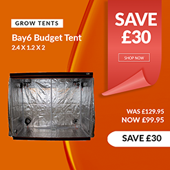 Bay 6 Budget Tent