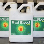 500ml Bottles Of Bud Blood Liquid Now In Stock