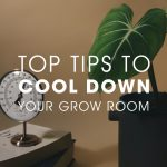 Tips For Keeping Optimum Grow Room Temperatures During The Warm Summer Months
