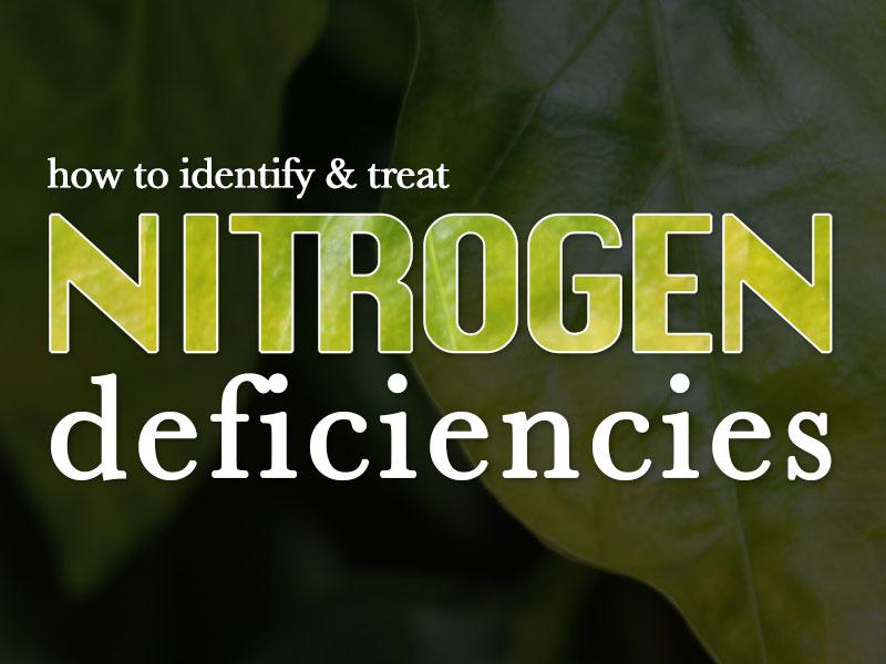 How To Identify & Treat Nitrogen Deficiencies