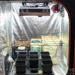 Introducing The New BAY6 Dual Room Grow Tent