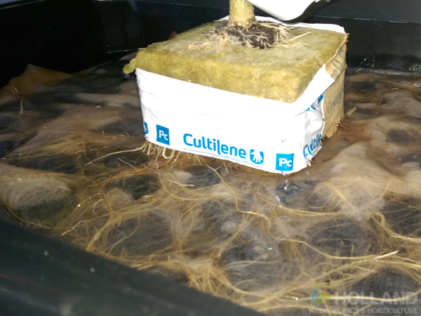 Chill Plant Roots @ Week #8