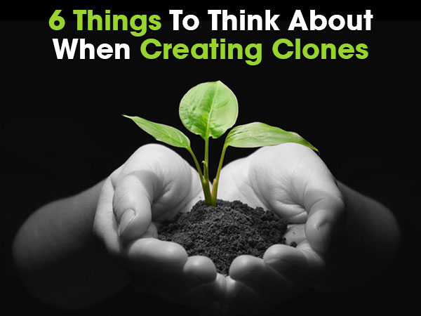 6 Things To Think About When Creating Clones