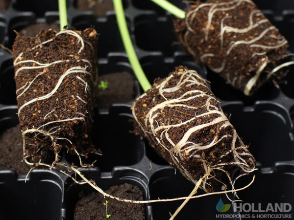 Rooted Out Clones