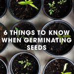 6 Things To Know When Germinating Seeds