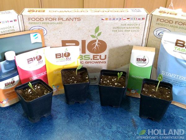 Watermelon Week #1 - 0.5L Pots & BioTabs