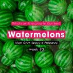Watermelons Week #2 & Main Grow Space Is Prepared