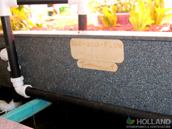 Ebb-And-Flow AquaPonics System