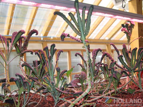 Plants growing in AquaPonics
