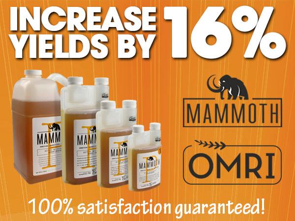 Mammoth P Increase Yields