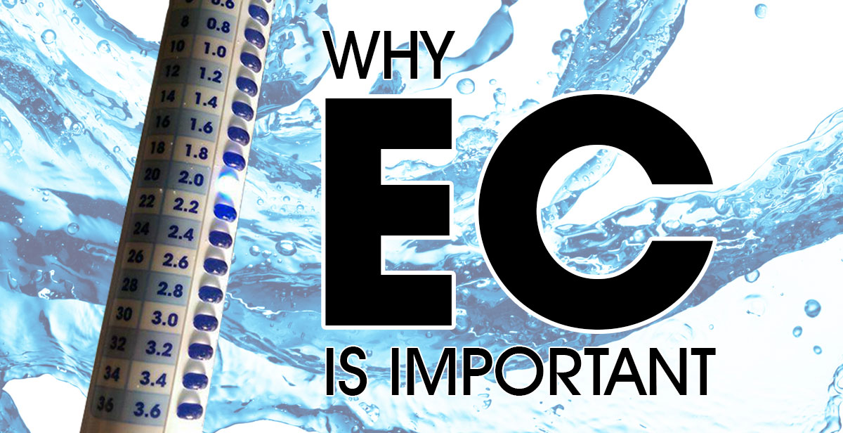 Why EC Is Important In Hydroponics | What's On The Grow