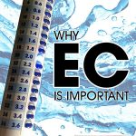 Why EC Is Important In Hydroponics