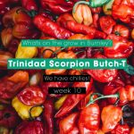 Butch T @ Week #10 - We Have Chillies!