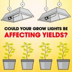 Could Your Grow Lights Be Affecting Yields?