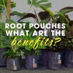 Root Pouches: What Are The Benefits?
