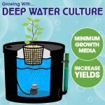 Growing With Deep Water Culture