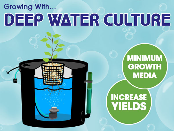 Growing With Deep Water Culture | hydroponics.co.uk