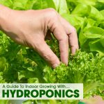 A Guide To Indoor Growing With Hydroponics