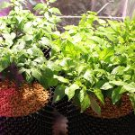 The Importance Of Vegetative Growth