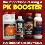 The Importance Of PK Boosters For Bigger & Better Yields