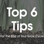 Top 6 Tips For The End of Your Grow Cycle