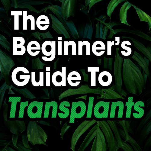 The Beginners Guide To Transplants