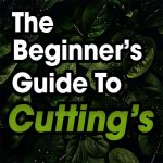 The Beginner's Guide To Taking Cutting's