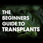 The Beginner's Guide To Transplants