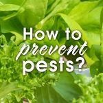 How to prevent Pests