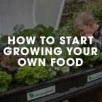 How to start growing your own food